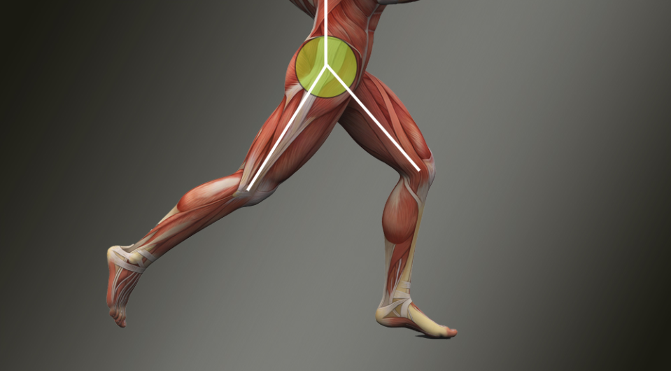 Hip Extension and Stride