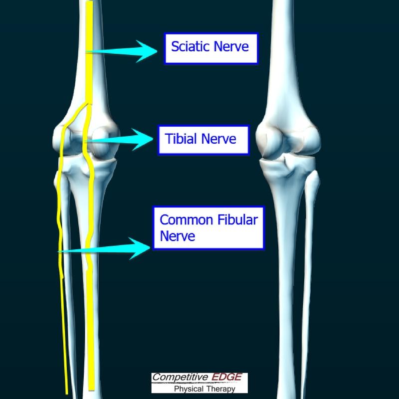 Posterior Knee Nerves