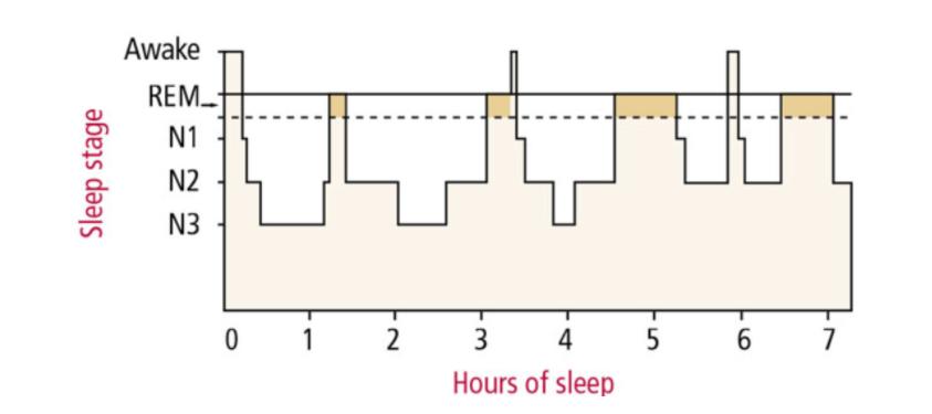 Sleep Architecture